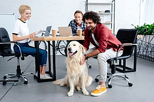 a dog in the workplace who was approved by the companys HR consulting team