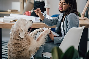 a dog playing with her owner as she works in her office